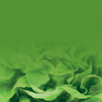 background-lettuce